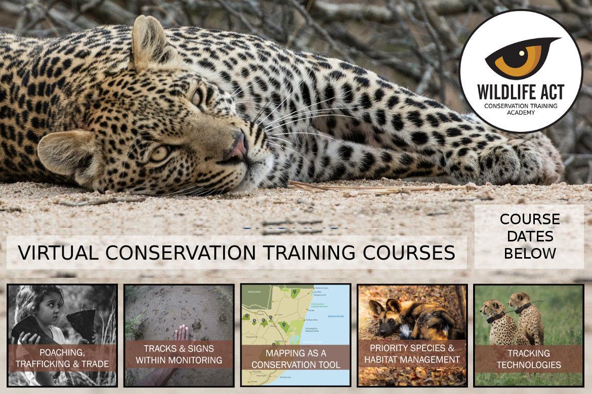 African Wildlife Conservation Courses Online