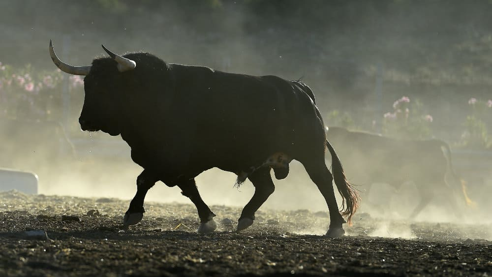 A bull outlined against a field